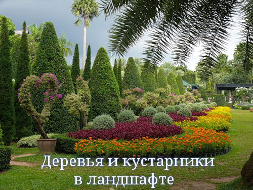 Деревья и кустарники в ландшафте